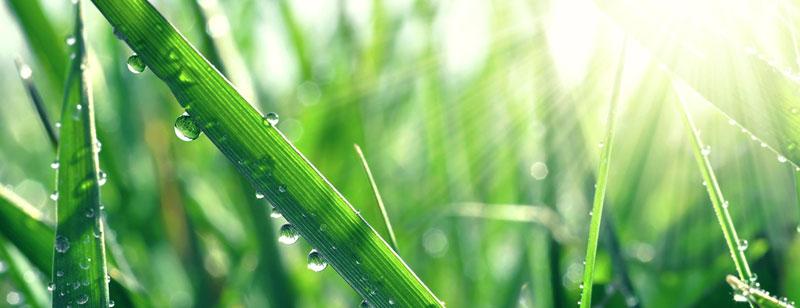 Lawn Maintenance and Fertilizing